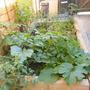 raised veg bed mid July