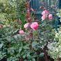 Garden_2010_190