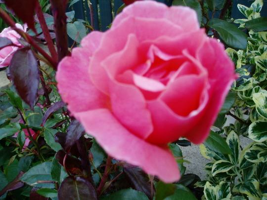 garden_2010_188.jpg