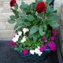 Garden_2010_192