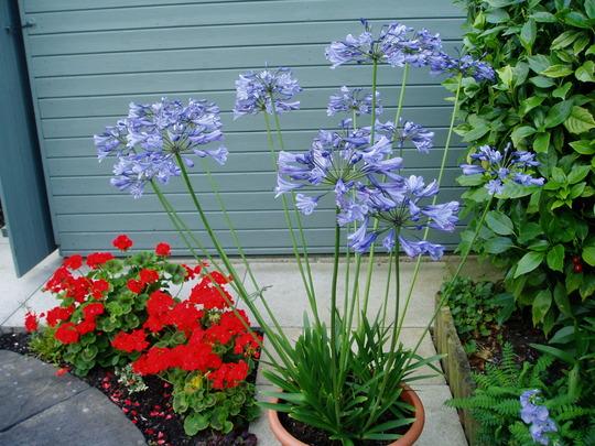 garden_2010_194.jpg