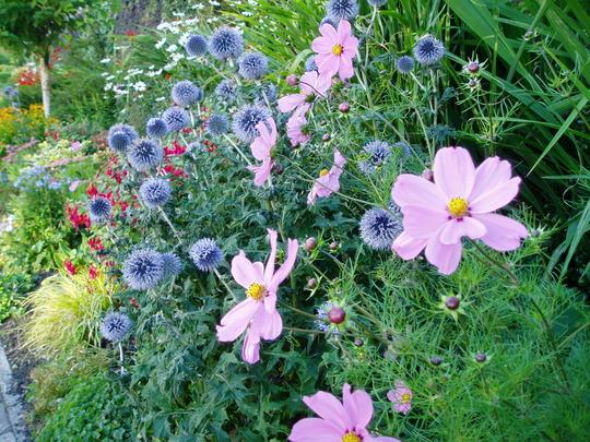 garden_2010_198.jpg