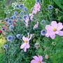 Garden_2010_198