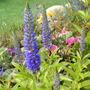 Garden_aug122010_005