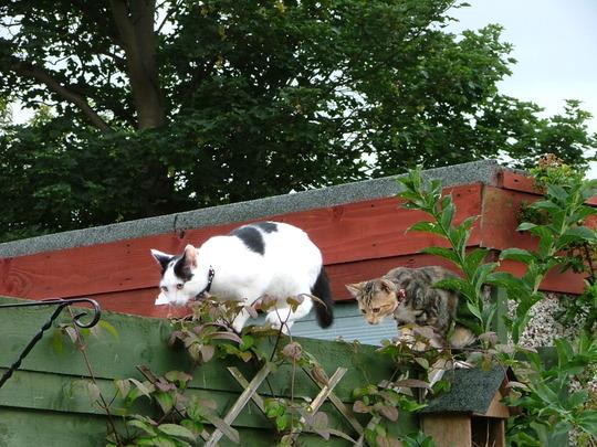 Tilly & Jack