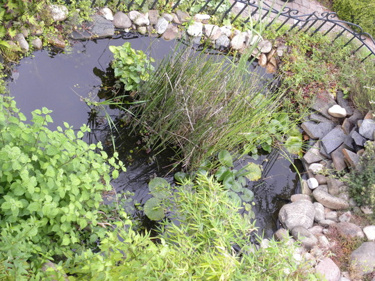 our pond seen from above   100810