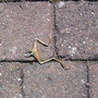 RIP  my lovely  darling frog  240710