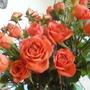 Close-up of orange roses.
