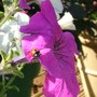 Garden_aug_011