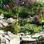 Garden_aug_033