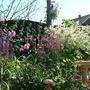 Garden_aug_037