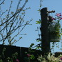 Garden_aug_043