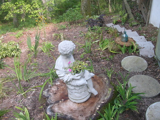 side garden (ornamental basil, day lilly's, shasta daisy, sedum, cordalis lutea etc)