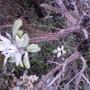 Mystery plant's stems