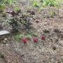 lower part of new side garden