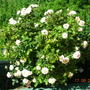 My_plants_008
