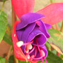 My_plants_001