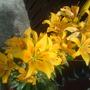 lillies, 3