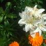 lillies, 5