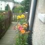 garden_mid_july_039.jpg