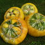 Gourds       &#x27; Turk&#x27;s Turban  &#x27; 