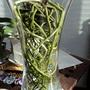 New bigger vase for Vanda