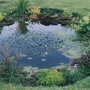 My garden pond I built a few years ago