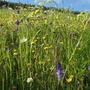 8. A Swiss meadow. June 2010.