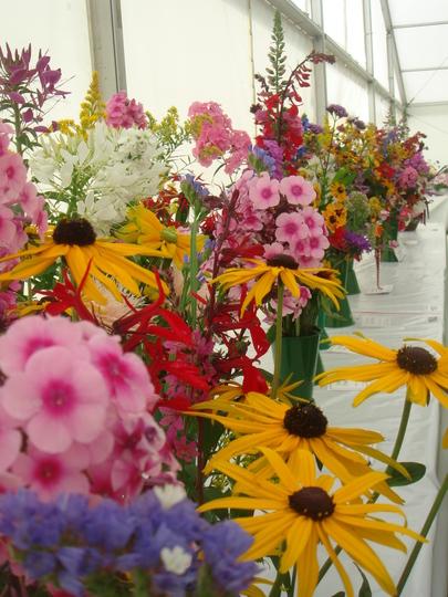 Five perenial flowers entries