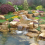 Tarleton Speciman Plants display garden