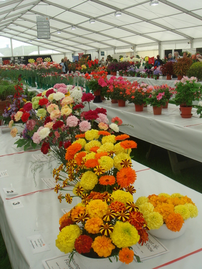 The amateur growers competition tent
