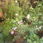Gardennorth3