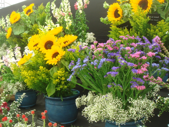 Display of annuals