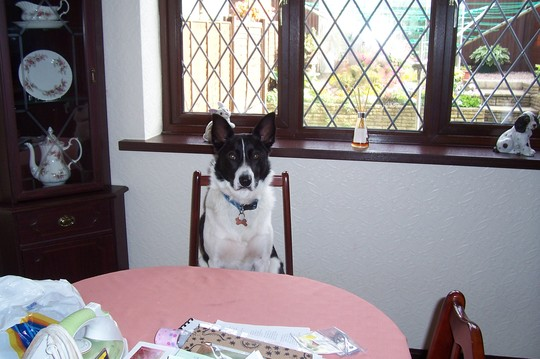Max, my daughters dog is in the chair, waiting for the meeting to begin.
