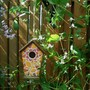 Bird house and Clematis 'Gazelle'