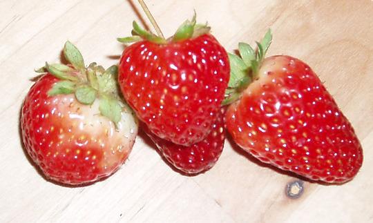 Strawberries (Fragaria chiloensis (Sand or Beach or Wild Strawberry))