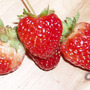 Strawberries (Fragaria chiloensis (Sand or Beach or Wild Strawberry))