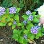 Flowers_in_garden_002