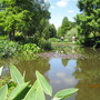 Another one of the gently stepped ponds at Chatto's garden