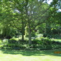 Under planting of a tree in shade. Beth Chatto garden