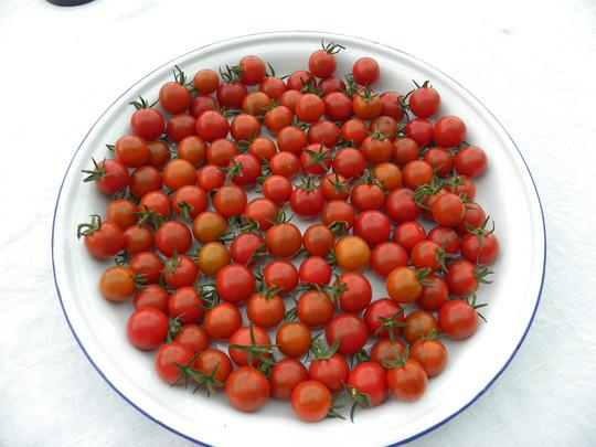 tomatoes Sweet Million  - 220810