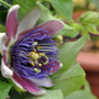 one more passion flower;-)