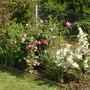 Rosa_centifolia_ssp_centifolia