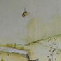 bee in wall paintings in gazebo -220810