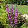 Garden_aug232010_009
