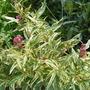 Garden_aug232010_032