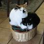 Basket-cases
