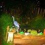 MY GARDEN + POND AT NIGHT