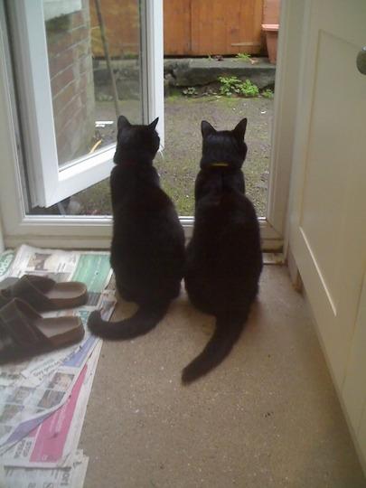 Guarding the door!!