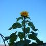 2010_040230plants0004